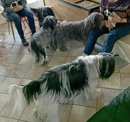 Alle gucken zu (von vorn nach hinten):Jule, Iris, Mama Luna und Jasmin