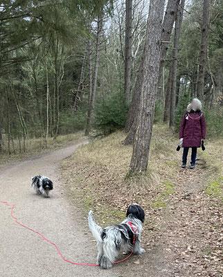 Wir gehen durch den Wald ins Dorf zurück.