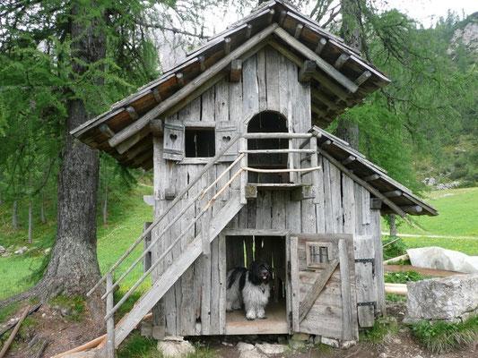 Hier war eine besonders schöne Hundehütte ...