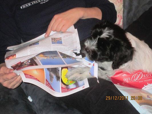 Frauchen liest einen Kreuzfahrtprospekt. Den habe ich gleich zerbissen. Sie hat jetzt mich, mehr braucht sie nicht!