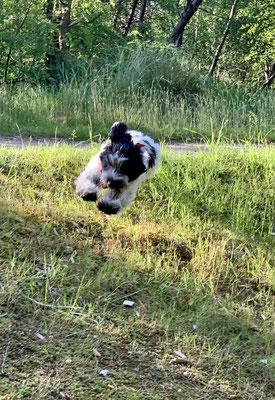 ... ich weiß, dass ich noch nicht springen darf, aber es bringt so Spaß. ICH KOMME!