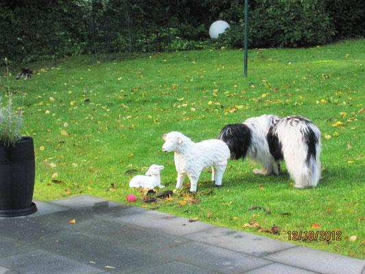 Das sind die Schafe, die Frauchen gekauft hat. Das Große steht so 'rum und riecht nicht ...