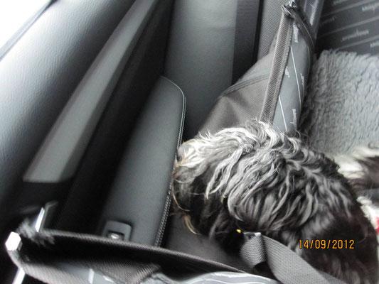 Dann fahren wir wieder nach Hause, Ich hänge im Auto so 'rum und warte ab.