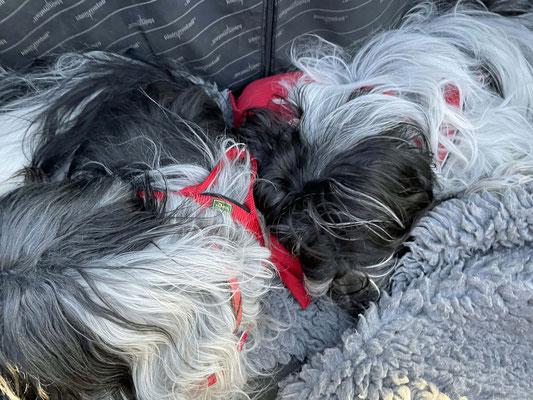 Auf der Rückfahrt haben wir geschlafen, ...