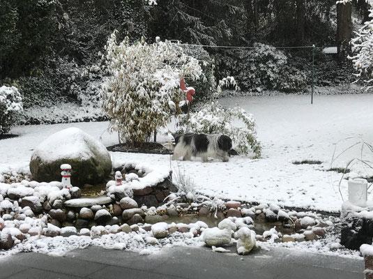 Als ich morgens zum Pipi-Platz wollte, lag Schnee: SUPER!