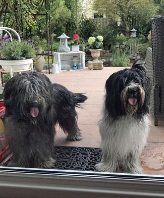 Wir waren zu Connys Geburtstag eingeladen, Henry und ich haben im Garten gespielt und ...