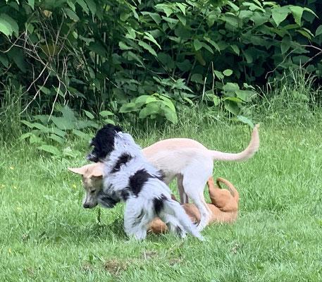 Amy und Holly, meine Spielkameraden in der Hundeschule.