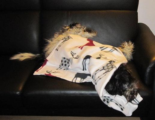 Das ist meine neue Decke. Eingentlich soll ich oben drauf liegen, aber ich habe mich unten drunter gerollt.