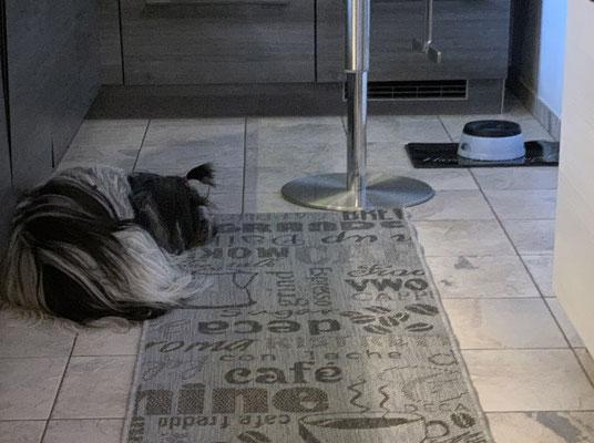Vor dem Urlaub hat Frauchen diesen ekligen Teppich gekauft, auf dem kann man nicht liegen; geht gar nicht!