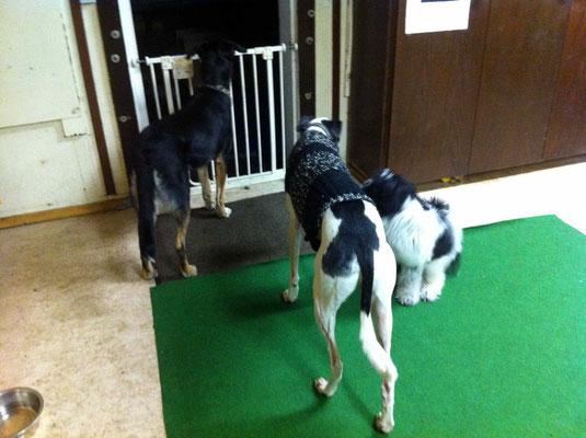 Hier bin ich in der Hundeschule. Karim und Noel sind Hunde von der Lehrerin, ...