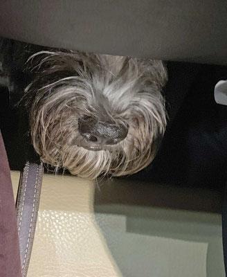 Ich sitze hier unter dem Tisch, aber es duftet nach Steak!!