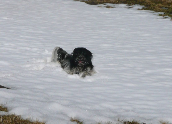 ... dem wenigen Schnee ...