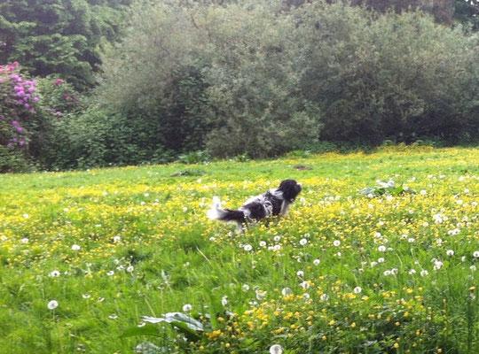 ... springe durch die Wiese mit den vielen Blumen ...