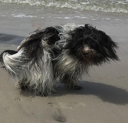 ... und haben am Strand gespielt.