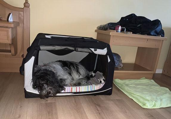Meine Schlafkiste steht in Herrchens Zimmer.
