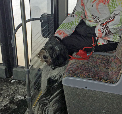 Wir bringen Frauchen immer mit dem Skibus zur Talstation. Wenn wir Glück haben, erwischen wir den Bus, den Doris fährt.