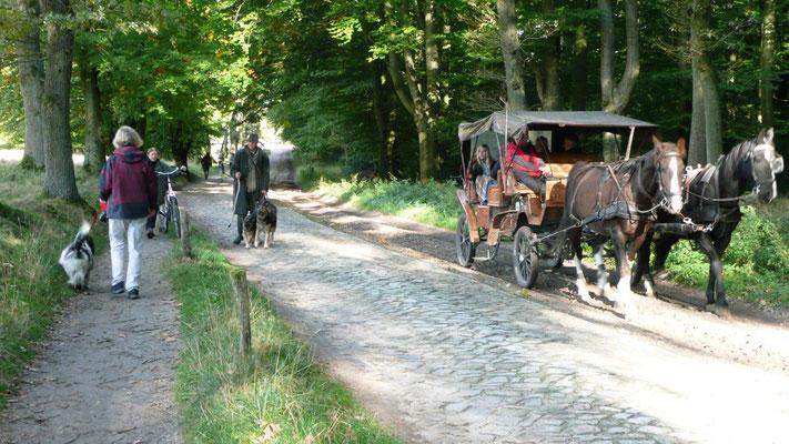 Auch die Autos sehen hier ganz anders aus, sie heißen Kutschen. Dann war da noch dieser Mann mit den Schäferhunden, die passen auf, daß die Heidschnucken nicht weglaufen.