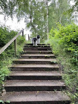 Auf dem Rückweg zum Hotel setzt Herrchen uns manchmal ab und wir machen noch einen kleinen Spaziergang.