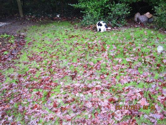 ... Alles voller Blätter. Die räume ich einzeln weg.