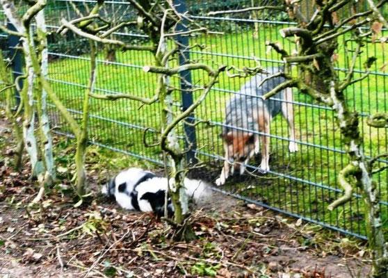 Ich freue mich immer sehr, wenn Xena mit mir am Zaun spielt