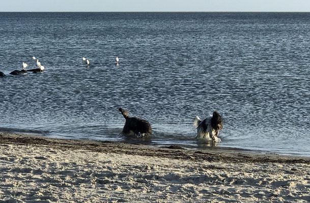 Mal kurz in die Ostsee,  ...