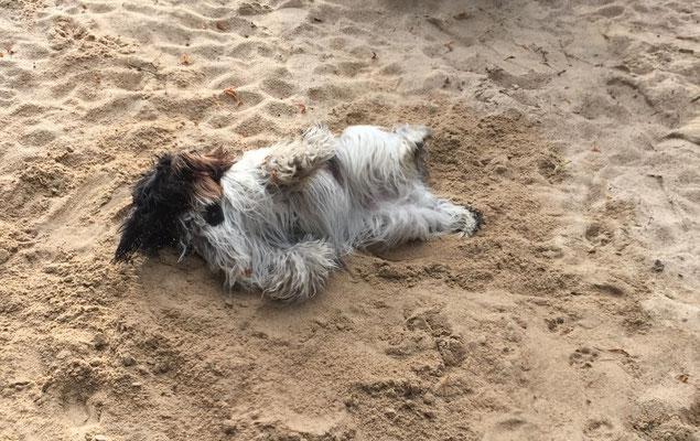 in der Sandkiste.