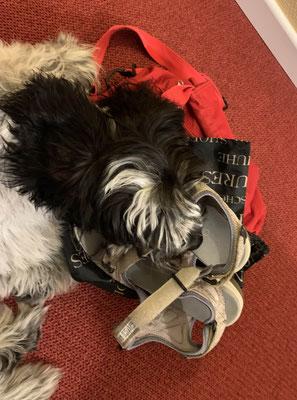 Etwas Schlaf in Frauchens Schuhen.