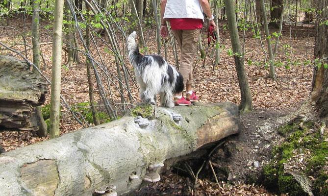Ich sollte über diesen Baumstamm balancieren, das habe ich gemacht.