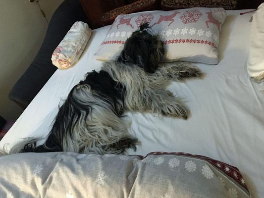 Hrrrmmm, es ist mir peinlich, daß Frauchen mich erwischt hat, aber Herrchens Bett war sooooo verlockend.