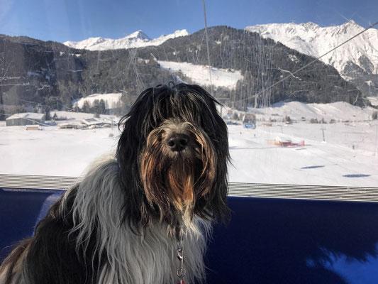 Manchmal fahren wir mit Frauchen mit der Gondel zur Bergstation.