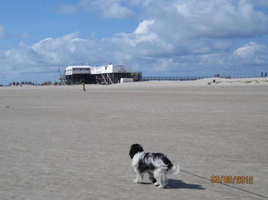 Dann laufen wir lange über den Sand; das kitzelt an den Pfoten!