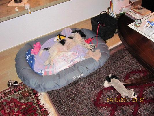 Jetzt schlafe ich. Manchmal wache ich auch auf. Wenn keiner guckt, kann ich an der Verzierung des Teppichs weiterarbeiten. 10 cm vom Rand habe ich schon geschafft.