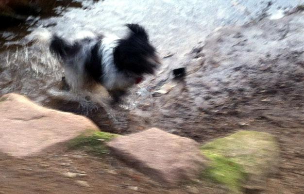 Wenn Ernie ins Wasser geht, gehe ich auch ins Wasser!