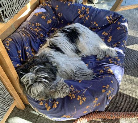 Ich liege im Wintergarten, wie seit Wochen. Seitdem es draußen warm ist, gehen wir nur noch zum Schlafen hinein.