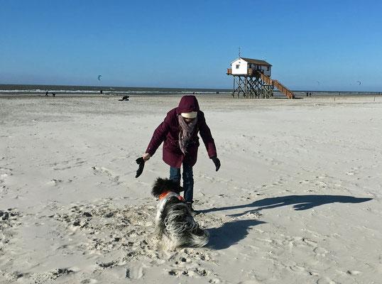Am Strand spiele ich gern mit Frauchen und/oder Herrchen.