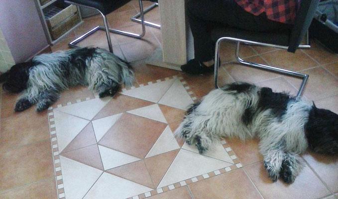 Mama und ich schlafen in der Küche ...