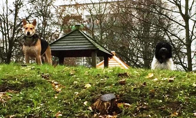 ... wir haben auf dem Feldherrenhügel gestanden und gemeinsam den Park überwacht.