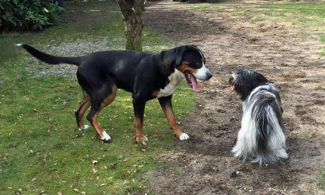 Das ist Casto, er gehört zu Rotraut und Horst;  das ist Verwandtschaft von Frauchen.