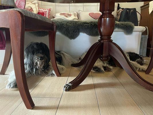 unter dem Esstisch an der Ofenbank