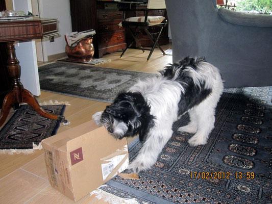 Hey, ich habe wieder ein Paket bekommen! Auspacken ist super.