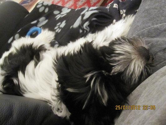 Manchmal schlafe ich auf dem Sofa, gern auf Frauchens Bein. Leider muss ich noch immer auf die Decke.