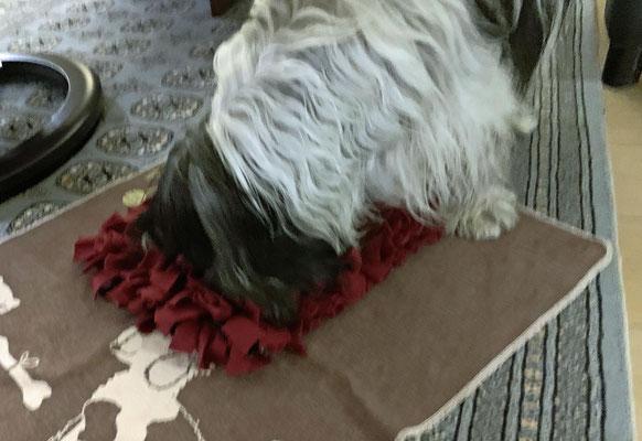 Typisch Frauchen! Sie hat auf dem Hundeweihnachtsmarkt einen Schnüffelteppich gekauft. Mit dem darf ich mich jetzt abmühen!
