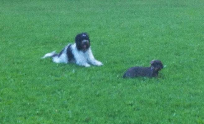 Meine Freundin Molly spielt nicht regelmäßig mit uns im Park.