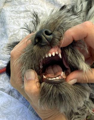 Ich bekomme Zähne, ...