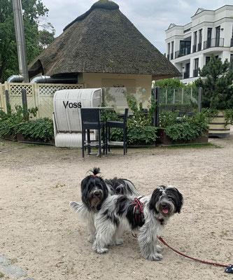 Wir waren auf der Promenade unterwegs, in Scharbeutz haben die Zweibeiner ...
