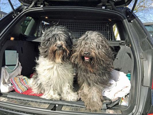 Wir sind gemeinsam im Kofferraum gefahren, ...