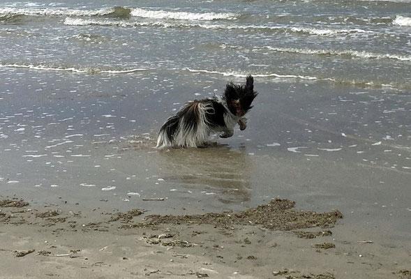 Juchuuu: Strand und Sonne. Ich rase ...