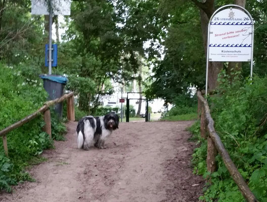 Tschüß Hundestrand!