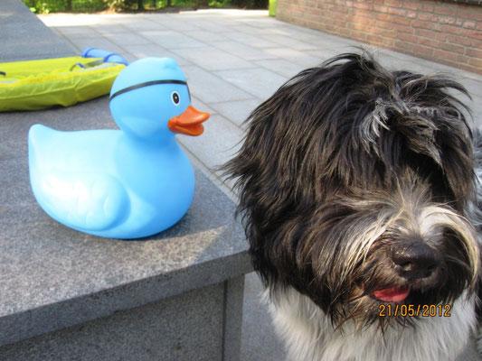 Eigentlich wollte ich mit der Ente einen Ausflug machen; irgenwo hin, wo ich in Ruhe daran herumkauen kann, ...