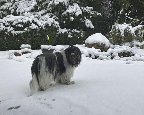 Zack, der Schnee kam noch einmal vorbei.